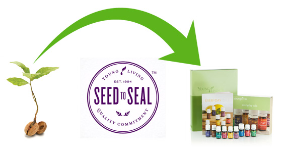 Seed to Seal